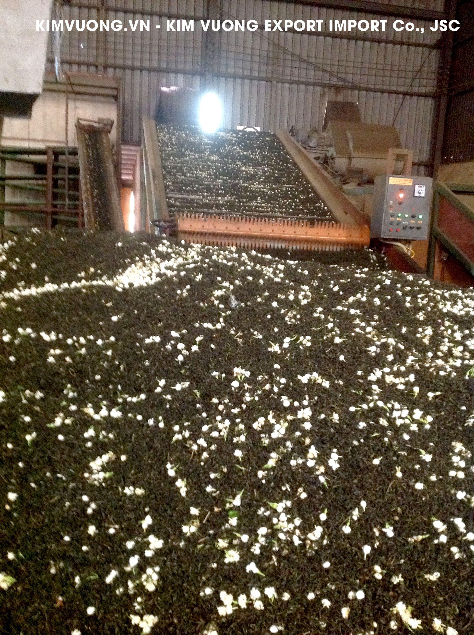 Tea export factory 6 - KIM VUONG EXPORT IMPORT Co.,JSC1